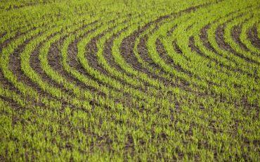 Åker och jordbruk. Foto: Jan Töve