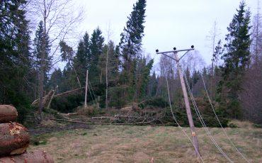 Spår efter storm. Foto: Ulricehamns kommun