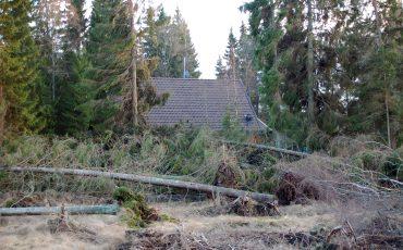 Nedfallen skog efter storm. Foto: Ulricehamns kommun