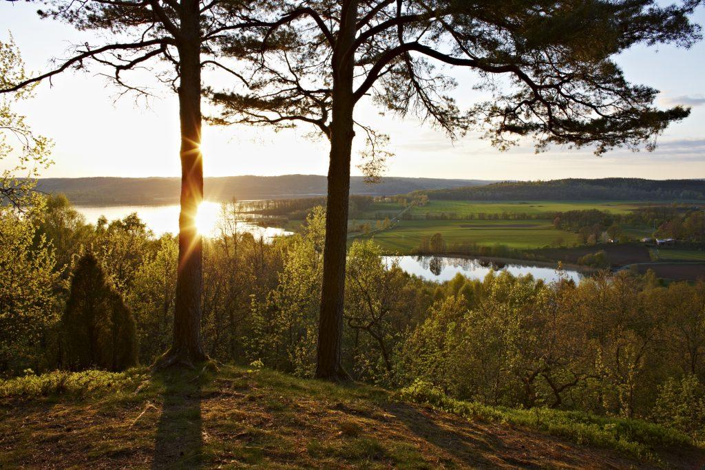 Bild på en kulle med två träd med en sjö och skog i bakgrunden. solnedgång.