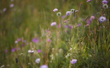 Blomsteräng Foto: Jan Töve