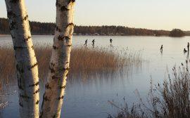 Skridskoåkare på Åsunden Foto: Jan Töve