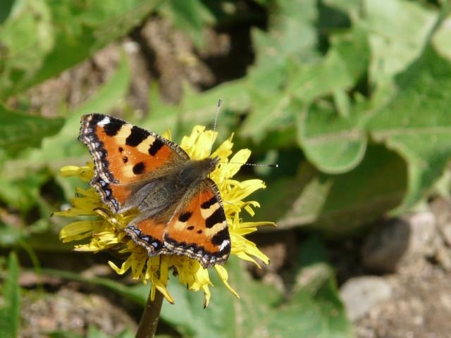 En orange fjäril som sitter på en gul blomma