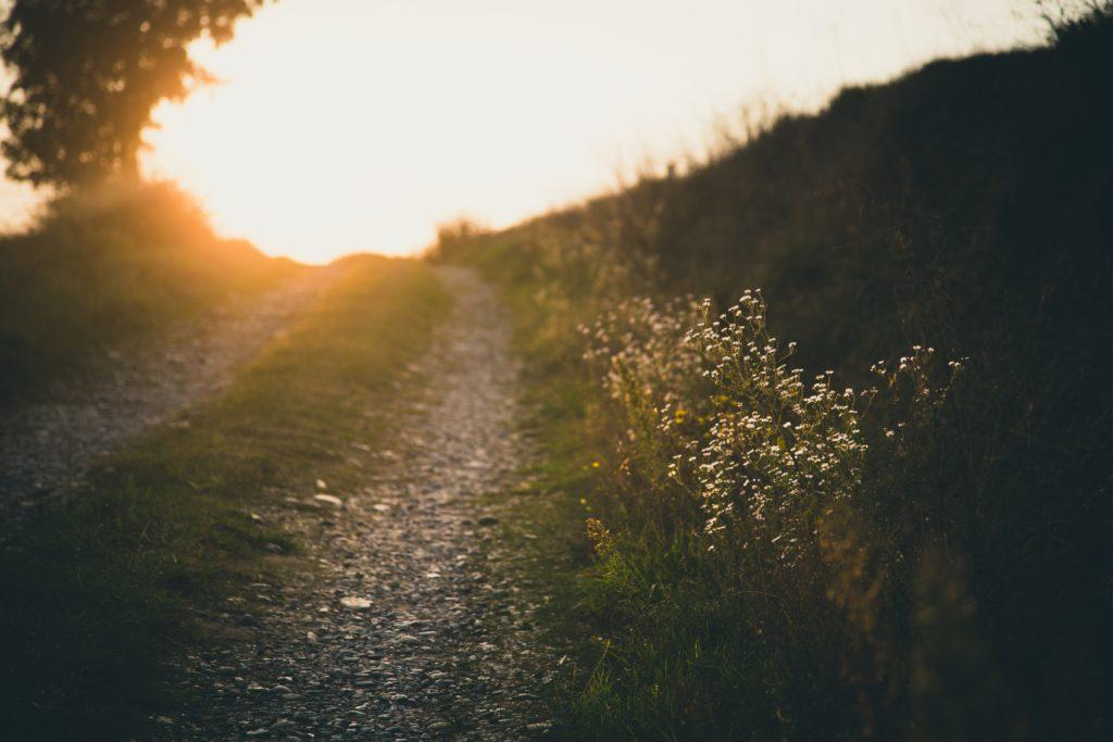 Bild på en grusväg med gräs i mitten i solnedgång väg.