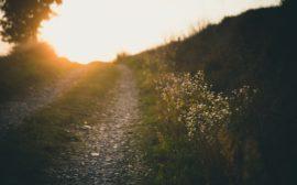 Bild på en väg.