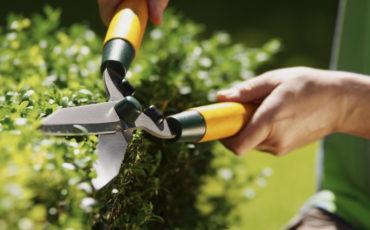 ett par händer som klipper en buske med häcksaxhäcksax